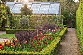 EAST RUSTON OLD VICARAGE GARDEN, NORFOLK: BOX EDGED BEDS OF TULIPS WITH GREENHOUSE / GLASSHOUSE BEHIND. SPRING, COUNTRY GARDEN, CLIPPED, TRIMMED, HEDGE, HEDGING
