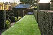 EAST RUSTON OLD VICARAGE GARDEN, NORFOLK: AVENUE OF YEW HEDGES WITH GRASS PATH AND SEAT / BENCH AS FOCAL POINT. SPRING, BOX BALLS, HORNBEAM. HEDGE, CLIPPED, TRIMMED, TOPIARY
