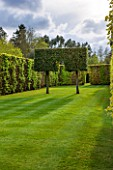 EAST RUSTON OLD VICARAGE GARDEN, NORFOLK: LAWN WITH CLIPPED BEECH HEDGING AND TOPIARY HORNBEAM ON STILTS - HEDGING, HEDGE, TRIMMED, SPRING, GREEN, COUNTRY GARDEN