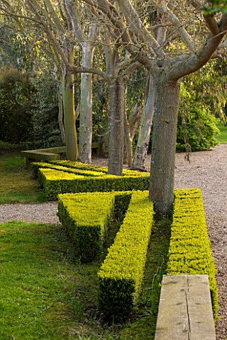 EAST_RUSTON_OLD_VICARAGE_GARDEN_NORFOLK_BOX_HEDGING_CUT_INTO_THIN_STRIPS_AROUND_TREES__TOPIARY_CLIPP