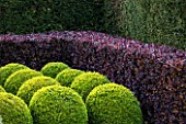 EAST RUSTON OLD VICARAGE GARDEN, NORFOLK: CLIPPED TOPIARY BOX BALLS AND BERBERIS HEDGE - HEDGING, GREEN, TRIMMED, SHRUB, EVERGREEN, SHAPED, SHAPE