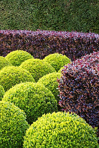 EAST_RUSTON_OLD_VICARAGE_GARDEN_NORFOLK_CLIPPED_TOPIARY_BOX_BALLS_AND_BERBERIS_HEDGE__HEDGING_GREEN_