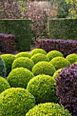 EAST RUSTON OLD VICARAGE GARDEN, NORFOLK: CLIPPED TOPIARY BOX BALLS WITH BERBERIS HEDGE - HEDGING, GREEN, TRIMMED, SHRUB, EVERGREEN, SHAPED, SHAPE, FORMAL