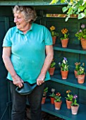 POPS PLANTS AURICULAS, HAMPSHIRE: LESLEY ROBERTS WATERING AURICULAS IN THE AURICULA THEATRE
