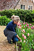 THE LAND GARDENERS, WARDINGTON MANOR, OXFORDSHIRE: BRIDGET ELWORTHY CUTTING TULIPS FOR FLOWER ARRANGING. CUT FLOWER, CUTTING GARDEN, WALLED GARDEN, SPRING, WOMAN, LADY
