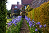 WARDINGTON MANOR, OXFORDSHIRE: THE LAND GARDENERS: VIEW TO YEW HEDGE IN SPRING WITH PATH LINED WITH BLUE IRIS - FRAME, FRAMING, PATH, STONE, HOUSE, COUNTRY GARDEN