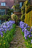 WARDINGTON MANOR, OXFORDSHIRE: THE LAND GARDENERS: PATH IN SPRING LINED WITH BLUE IRIS WITH YEW HEDGE BESIDE - FRAME, FRAMING, PATH, STONE, HOUSE, COUNTRY GARDEN