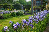 WARDINGTON MANOR, OXFORDSHIRE: THE LAND GARDENERS: PATH IN SPRING LINED WITH BLUE IRIS - GRASS AND BORDER WITH WHITE LUPINS. HOUSE, COUNTRY GARDEN