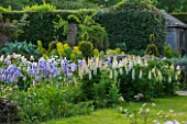 WARDINGTON MANOR, OXFORDSHIRE: THE LAND GARDENERS: GRASS AND BORDER IN SPRING WITH WHITE LUPINS AND BLUE IRIS. HOUSE, COUNTRY GARDEN