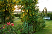 THE MANOR HOUSE, STEVINGTON, BEDFORDSHIRE: THE LABURNUM ARCH AT DAWN
