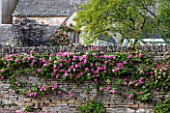 ABLINGTON MANOR  GLOUCESTERSHIRE: ROSES GROWING ON COTSWOLD STONE WALL BESIDE TENNIS COURT. ROMANCE  ROMANTIC  CLASSIC ENGLISH GARDEN  JUNE  SUMMER  FLOWERS
