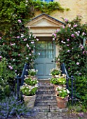 ABLINGTON MANOR  GLOUCESTERSHIRE: CLIMBING ROSE - ROSA CHARLES RENNIE MACKINTOSH - GROWING AGAINST MANOR HOUSE FRONT DOOR. CLASSIC COUNTRY GARDEN  JUNE  SUMMER  ROMANCE  ROMANTIC