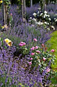 GREAT FOSTERS, SURREY: THE ROSE GARDEN IN JUNE: CATMINT - NEPETA FAASSENII AND ROSES. FORMAL, SUMMER, ENGLISH GARDEN, ROSES, CLASSIC, ROMANTIC, BORDER, PURPLE, BLUE