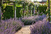 GREAT FOSTERS, SURREY: THE ROSE GARDEN IN JUNE: CATMINT - NEPETA FAASSENII AND ROSES. FORMAL, SUMMER, ENGLISH GARDEN, ROSES, CLASSIC, ROMANTIC, BORDER, PURPLE, BLUE, WHITE, PATH