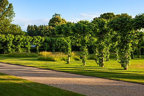 PRIVATE_GARDEN_GLOUCESTERSHIRE__DESIGNER_ANGEL_COLLINS_ROW_OF_POLLARDED_LIMES__TILIA_PLATYPHYLLOS_BE