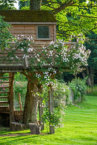 OLD_NETLEY_MILL_SHERE_SURREY_WOODEN_TREE_HOUSE_BY_ALAN_LAWRENCE_WITH_CLIMBING_ROSE__ROSA_PAULS_HIMAL