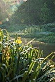 OLD NETLEY MILL, SHERE, SURREY: EARLY MORNING SUN AND MIST ON THE LAKE WITH FLAG IRIS - IRIS PSEUDACORUS IN THE FOREGROUND. JUNE, SUMMER