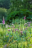 OLD NETLEY MILL, SHERE, SURREY: BORDER WITH ALLIUMS, POPPIES, ALCHEMILLA AND FOXGLOVES  - GARDEN, FLOWER, JUNE, SUMMER