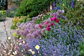 BROUGHTON CASTLE, OXFORDSHIRE: BORDER IN THE WALLED GARDEN WITH ROSES, OENOTHERA, NEPETA AND ALLIUMS  - SUMMER, JUNE, FLOWERS