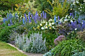 BROUGHTON CASTLE, OXFORDSHIRE: BORDER BESIDE THE WALLED GARDEN WITH DELPHINIUMS, PHLOMIS RUSSELIANA AND STCAHYS BYZANTINA  - SUMMER, JUNE, FLOWERS
