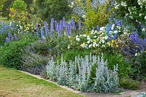BROUGHTON_CASTLE_OXFORDSHIRE_BORDER_BESIDE_THE_WALLED_GARDEN_WITH_DELPHINIUMS_PHLOMIS_RUSSELIANA_AND