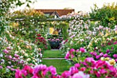 DAVID AUSTIN ROSES, ALBRIGHTON, WEST MIDLANDS: AMAZING DISPLAY OF ROSES IN THE ROSE GARDEN IN JUNE. SCENT, SCENTED, FLOWERS, SUMMER, PROFUSION, FORMAL, FLOWERBEDS, BORDER