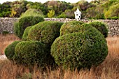 JONATHAN BAILLIE GARDEN, ALAIOR, MENORCA: CLIPPED TOPIARY OLIVE TREES, MEDITERRANEAN