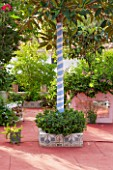 JONATHAN BAILLIE GARDEN, ALAIOR, MENORCA: PATIO WITH RED FLOOR, RAISED BED WITH TREE WITH BARK PAINTED WITH BLUE AND WHITE STRIPES