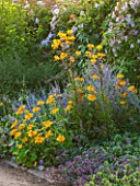 WEST DEAN GARDENS, WEST SUSSEX: HERBACEOUS BORDER IN BLUE AND YELLOW - PLANT ASSOCIATION / COMBINATION WITH PEROVSKIA, RUDBECKIA AND LILLIES