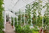 WEST DEAN GARDENS, WEST SUSSEX: INSIDE OF GLASSHOUSE / GREENHOUSE IN THE WALLED KITCHEN GARDEN. AUGUST, TOMATOES GROWING