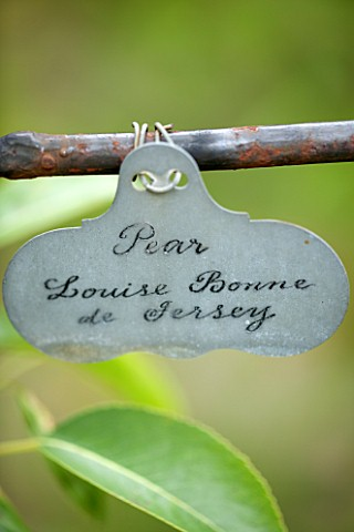 WEST_DEAN_GARDENS_WEST_SUSSEX_NAME_TAG__LABEL_OF_PEAR__PEAR_LOUISE_BON_DE_JERSEY_IN_THE_WALLED_VEGET