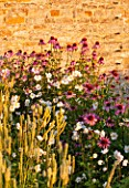 LAMPORT HALL, NORTHAMPTONSHIRE: PERENNIAL PLANTING IN THE WALLED CUTTING GARDEN - ECHINACEAS AND JAPANESE ANEMONES. SUNSET, FLOWER, FLOWERS, AUGUST, SUMMER