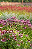 LAMPORT HALL, NORTHAMPTONSHIRE: BORDER IN THE WALLED KITCHEN GARDEN - CUTTING GARDEN WITH ECHINACEA, JOE PYE WEED AND ERYNGIUMS - FLOWERS, AUGUST, SUMMER