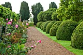 LAMPORT HALL, NORTHAMPTONSHIRE: VIEW ALONG GRAVEL PATH WITH BOX DOMES AND BORDER WITH HOLLYHOCKS. SUMMER, ENGLISH GARDEN, AUGUST, FORMAL, TOPIARY, CLIPPED