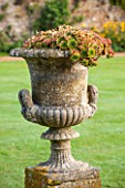 LAMPORT HALL, NORTHAMPTONSHIRE: STONE URN  / CONTAINER ON THE LAWN PLANTED WITH SEMPERVIVUMS - FORMAL, CLASSIC ENGLISH, COUNTRY GARDEN, CONTAINER