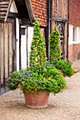 GREAT FOSTERS. SURREY:  TERRACOTTA CONTAINERS IN THE COURTYARD PLANTED WITH BLACK EYED SUSAN - THUNBERGIA ALATA. POT, ANNUAL, CLIMBER, CLIMBING, ANNUAL