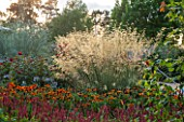 RHS GARDEN, WISLEY, SURREY: THE BOWES - LYON GARDEN IN SEPTEMBER - PLANTING OF HELENIUMS AND STIPA GIGANTEA IN EVENING LIGHT