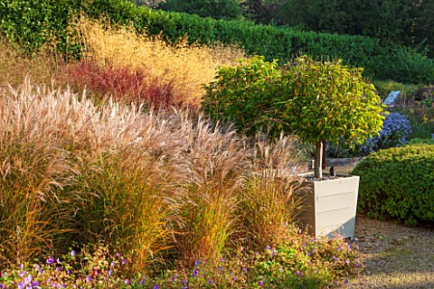 SURREY_GARDEN_DESIGNED_BY_ANTHONY_PAUL_GRASS_GARDEN_WITH_MISCANTHUS_SINENSIS_SILBERFEDER_WITH_WOODEN