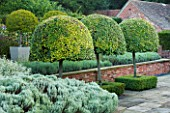 SURREY GARDEN DESIGNED BY ANTHONY PAUL: THREE CLIPPED TOPIARY PORTUGAL LAUREL - PRUNUS LUSITANICA MYRTIFOLIA, AS STANDARDS -  COUNTRY GARDEN, SUMMER