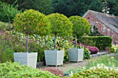SURREY GARDEN DESIGNED BY ANTHONY PAUL: THREE CLIPPED TOPIARY PORTUGAL LAUREL - PRUNUS LUSITANICA MYRTIFOLIA, AS STANDARDS, IN CONTAINERS -  COUNTRY GARDEN, SUMMER