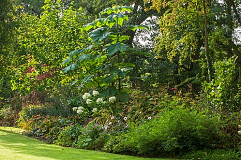 THE_LYNDALLS_HEREFORDSHIRE_BORDER_WITH_HYDRANGEA_AND_PAULOWNIA_TOMENTOSA__AGM__CLASSIC_COUNTRY_GARDE