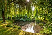 THE LYNDALLS, HEREFORDSHIRE: POND / POOL WITH GUNNERA MANICATA AND WEEPING WILLOW. CLASSIC COUNTRY GARDEN, WATER