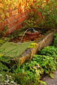 RYE HALL FARM, YORKSHIRE - DESIGNER SARAH MURCH - COUNTRY GARDEN, AUTUMN - TROUGH / POND / POOL WITH FROG FOUNTAIN AND AZOLLA FILICULOIDES - WATER FERN - AND WILD STRAWBERRIES