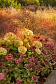 RYE HALL FARM, YORKSHIRE - DESIGNER SARAH MURCH - COUNTRY GARDEN, AUTUMN - PLANT COMBINATION, PLANT ASSOCIATION - HYDRANGEA ANNABELLE, SEDUM MATRONA, ANEMANTHELE LESSONIANA