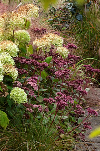 RYE_HALL_FARM_YORKSHIRE__DESIGNER_SARAH_MURCH__COUNTRY_GARDEN_AUTUMN__PLANT_COMBINATION_PLANT_ASSOCI