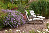 RYE HALL FARM, YORKSHIRE - DESIGNER SARAH MURCH - COUNTRY GARDEN, AUTUMN - GRAVEL GARDEN WITH WHITE CHAIRS / LOUNGERS AND ASTER FRIKARTII AND ROSE KENT