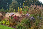 ELLICAR GARDENS, YORKSHIRE - DESIGNER SARAH MURCH - COUNTRY GARDEN - AUTUMN BORDER - MOLINIA, ASTER LITTLE CARLOW, ASTER NOVAE-ANGLIAE ANDENKEN AN ALMA POTSCHKE, OCTOBER