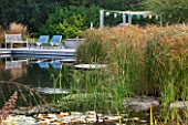 ELLICAR GARDENS, YORKSHIRE - DESIGNER SARAH MURCH - WATER GARDEN - NATURAL SWIMMING POND / POOL - VIEW ACROSS POND TO DECKING AND CHAIRS WITH PERGOLA AND BENCH. CYPERUS LONGUS