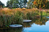 ELLICAR GARDENS, YORKSHIRE - DESIGNER SARAH MURCH - WATER GARDEN - NATURAL SWIMMING POND / POOL - VIEW ACROSS POND TO DECKING - CYPERUS LONGUS AND WOODEN PERGOLA