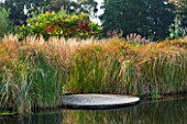 ELLICAR GARDENS, YORKSHIRE - DESIGNER SARAH MURCH - WATER GARDEN - NATURAL SWIMMING POND / POOL - VIEW ACROSS POND TO DECKING - CYPERUS LONGUS AND RHUS TYPHINA. OCTOBER, AUTUMN